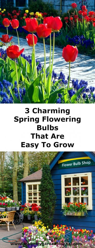 3 CHARMING SPRING FLOWERING BULBS THAT ARE EASY TO GROW, A COUNTRY GARDEN JOURNAL