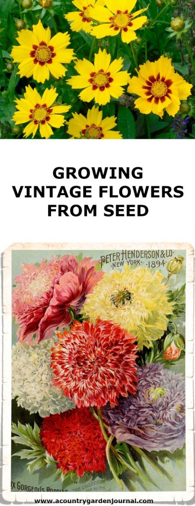 GROWING VINTAGE FLOWERS FROM SEED, A COUNTRY GARDEN JOURNAL