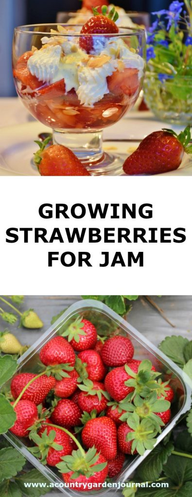 GROWING STRAWBERRIES FOR JAM, A COUNTRY GARDEN JOURNAL