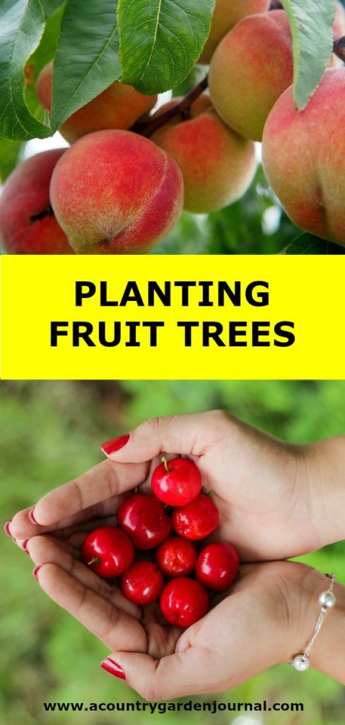 PLANTING FRUIT TREES, A COUNTRY GARDEN JOURNAL