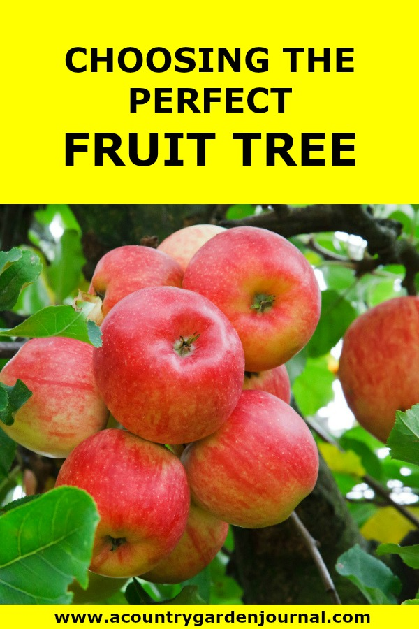 CHOOSING THE PERFECT FRUIT TREE: A COUNTRY GARDEN JOURNAL;