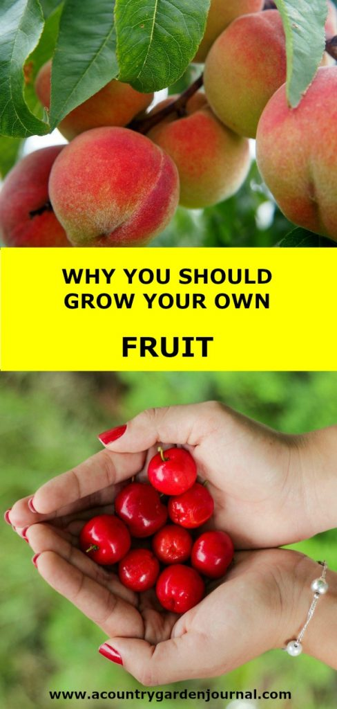 WHY YOU SHOULD GROW YOUR OWN FRUIT, A COUNTRY GARDEN JOURNAL