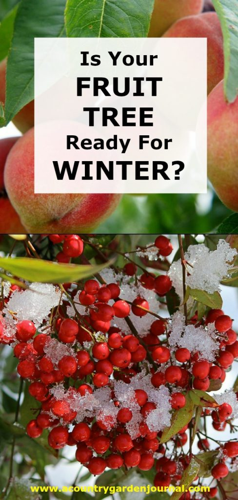 IS YOUR FRUIT TREE READY FOR WINTER? A COUNTRY GARDEN JOURNAL