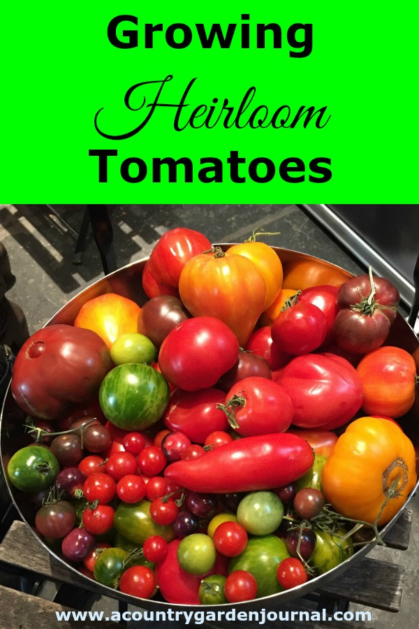 GROWING HEIRLOOM TOMATOES, A COUNTRY GARDEN JOURNAL