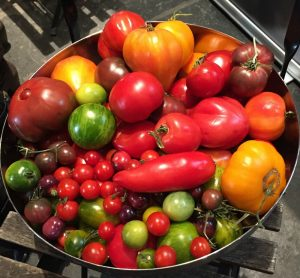 Tomatoes, Multicolored