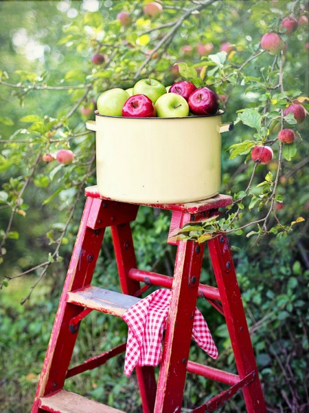 Apples on a Red Ladder