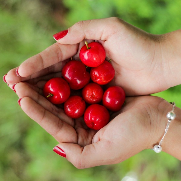 Cherries Held In Two Hands