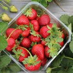 GROWING THE BEST STRAWBERRIES