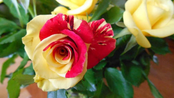 Swirled Rose