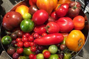 Tomatoes Multicolored