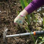HOW TO CORRECT SOIL pH