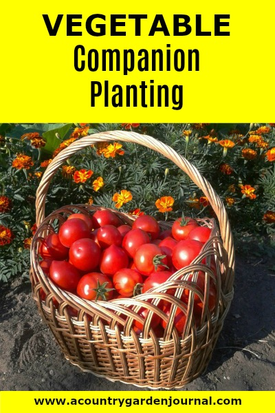 VEGETABLE COMPANION PLANTING, A COUNTRY GARDEN JOURNAL, #acountrygardenjournal