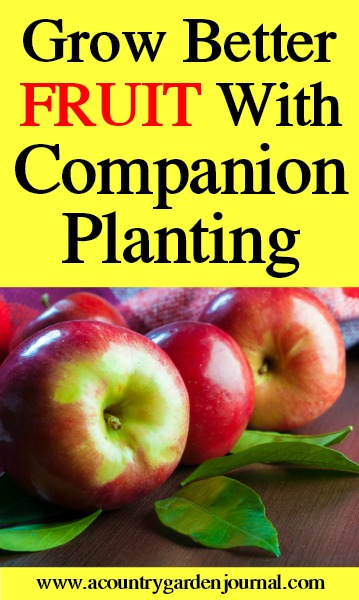 FRUIT COMPANION PLANTING, A COUNTRY GARDEN JOURNAL