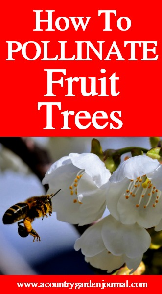 HOW TO POLLINATE FRUIT TREES, A COUNTRY GARDEN JOURNAL