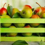 GROWING FRUIT TREES
