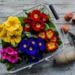 14 MUST HAVE GARDEN GIFT IDEAS